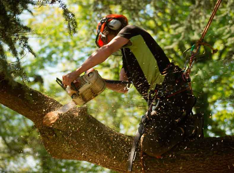 Tree Services in Exton PA
